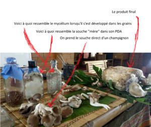 Fabrication de champignons — De A à Z