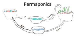 """Bananiers et """"permaponics"""""""
