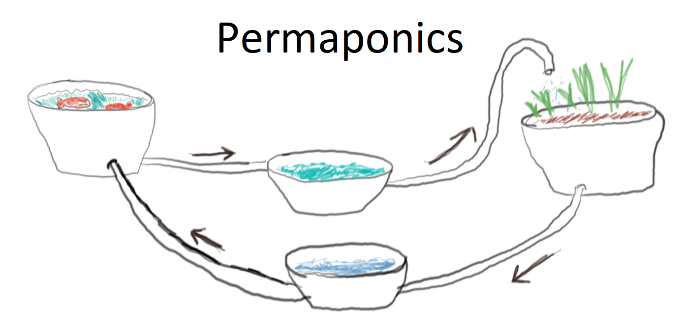 """You are currently viewing Bananiers et """"permaponics"""""""